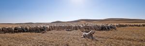 Grupo Pastores - Pastando
