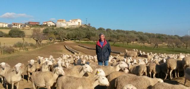 ganadero sector ovino