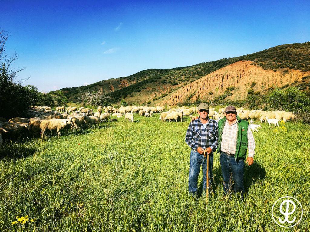 ganaderos ovino nuévalos monasterio de piedra