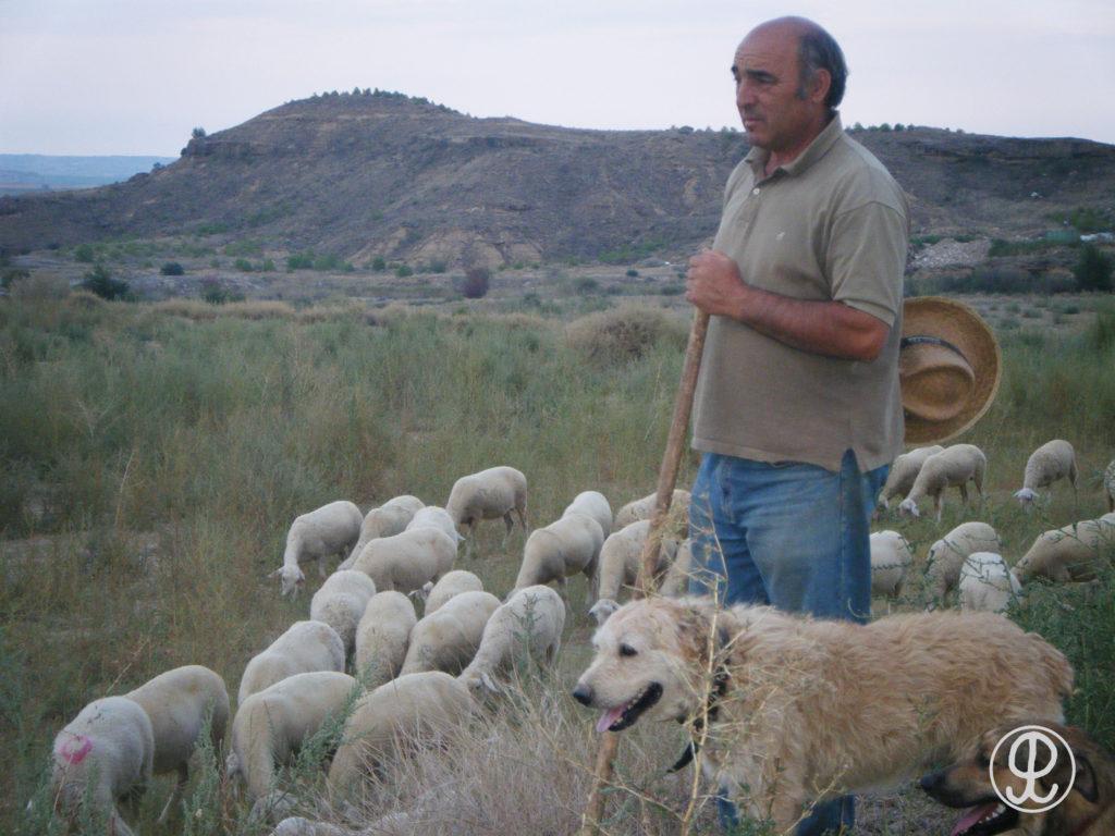 ganaderia ovino Grupo Pastores